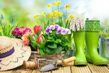vente jardinage